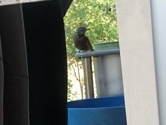鳥さんの登場です