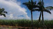 石垣島の夏の風景です