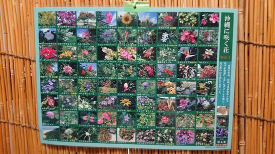沖縄に咲く花