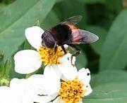 ハチさん大忙し
