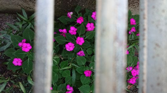 綺麗な花がいっぱい咲いています