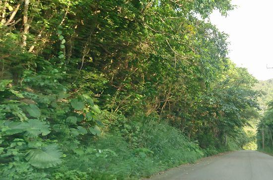 送迎道中は、大自然の中を走っていきます