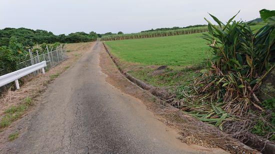 農道、いつもの散歩道