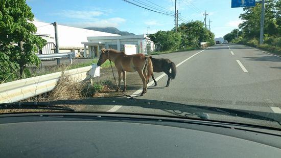 あらら、馬さん脱走中でしたね!