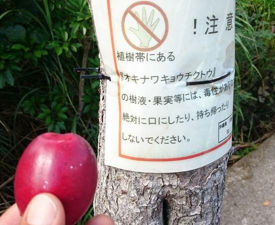 街路樹ですが、ご注意ください。