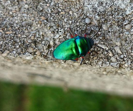 暖かい日は昆虫がでてきます。