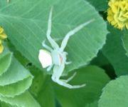 草むらをいじっているとちいさいクモ