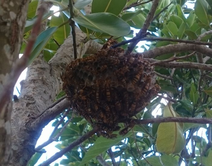 ハチがいっぱい集まっています