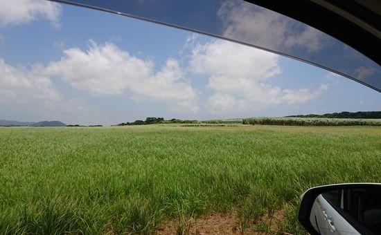 どこまでも続く牧草地♪