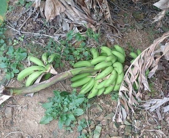 あっ!バナナ。