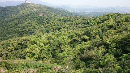 山々は、緑緑しています。