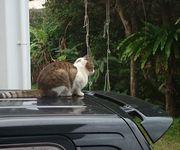 車の上に猫。。。