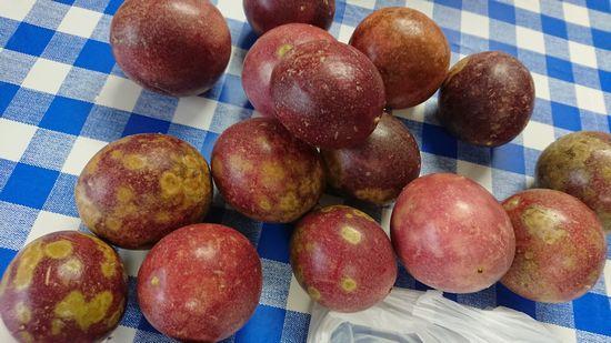 石垣島はフルーツの旬を迎えています。
