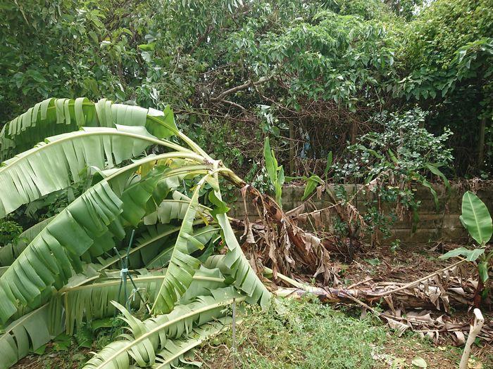 台風の被害はこちら。