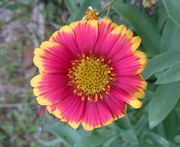 鮮やかなお花です。