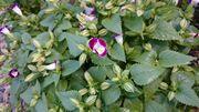 45円のお花。