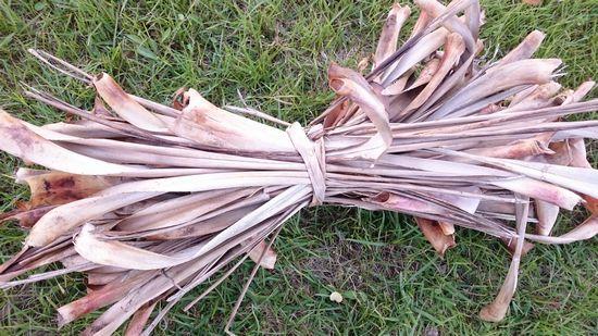 アダンの木の葉っぱをアダンの木の葉っぱで束ねる