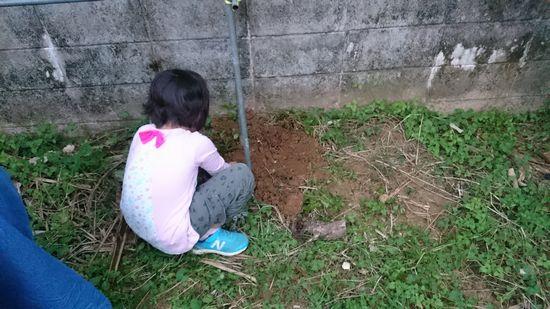 庭に植林をしています