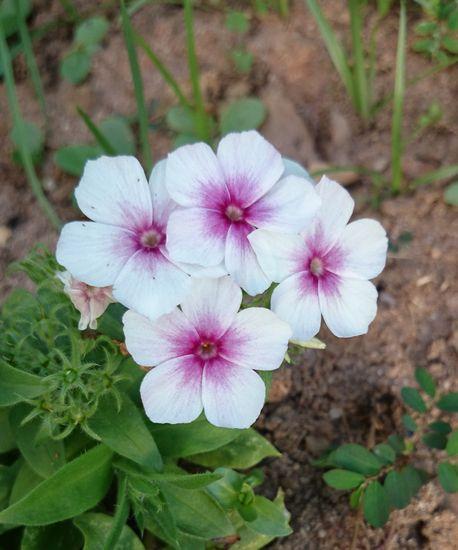 お花がきれいです