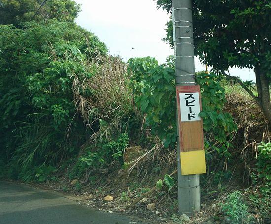 道路の看板。