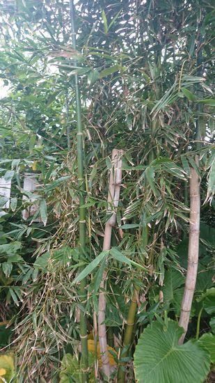 竹を捜索です