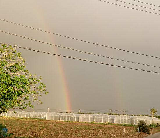 雨の後は虹ですね。