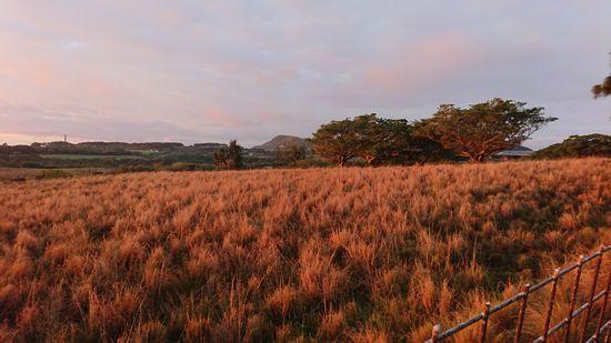 牧草地も朝焼けです♪