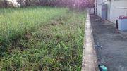 草刈り機で刈った隣の草