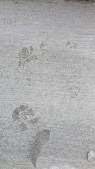 靴と犬の足跡。
