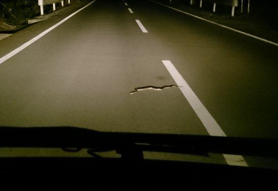 夜道ドライブ