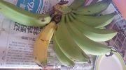 一本だけ黄色のバナナ