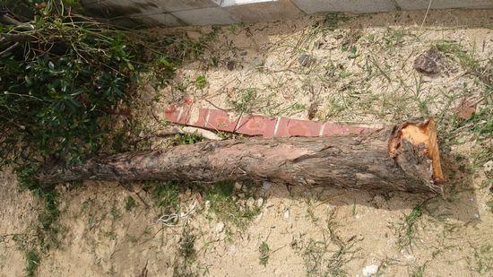 倒木がおうちの前に。。。