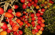 赤い実と緑の実