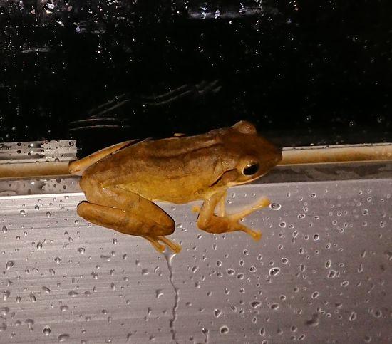 あまり見かけないカエルさん