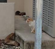 ご近所の猫がくつろいでいます。