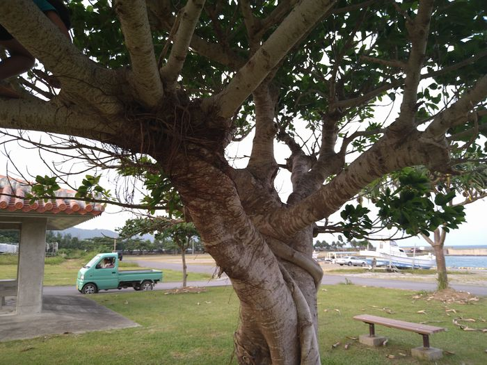 港の東屋にある木
