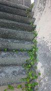 ビーチから堤防をよじ登る植物