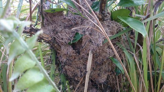山アリの巣