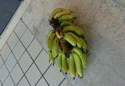 おっ!またまたバナナ頂きました