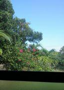 おうちから庭を眺めて