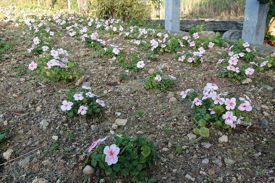公民館の花。