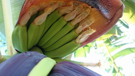 ちびバナナがびっちりです。