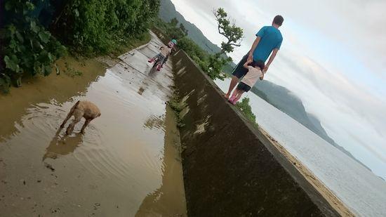 大雨後のお散歩