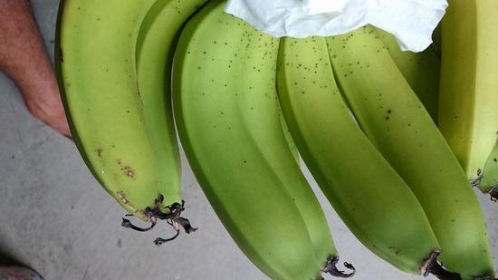 我が家のバナナ
