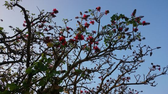 春の風物詩の花ですね