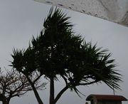 まだまだ風が強いです