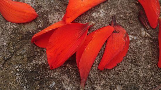 これがディゴの花びら