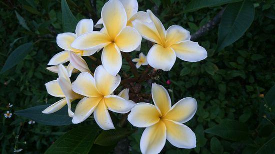 とってもキレイなお花です。
