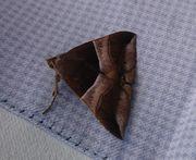 モノトーンの蛾です。