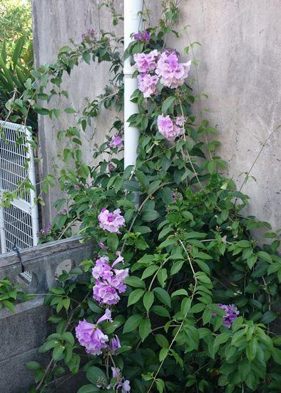 事務所裏に咲いた花を